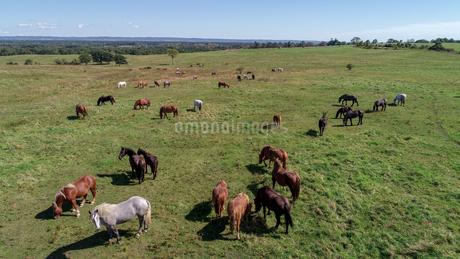 馬の放牧地の写真素材 [FYI03147389]