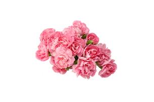 カーネーションの花束の写真素材 [FYI03147407]