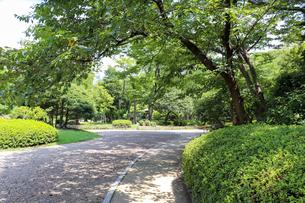 緑に囲まれた庭園の遊歩道の写真素材 [FYI03147616]