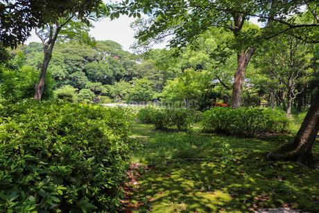 緑の庭園の写真素材 [FYI03147618]