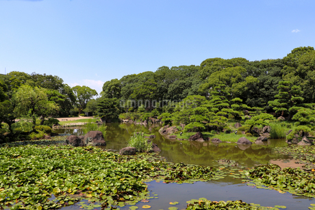 緑豊かな夏の庭園の写真素材 [FYI03147619]