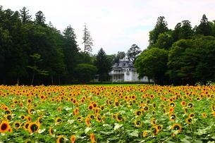 国指定重要文化財 青木周蔵那須別邸と向日葵の写真素材 [FYI03147752]