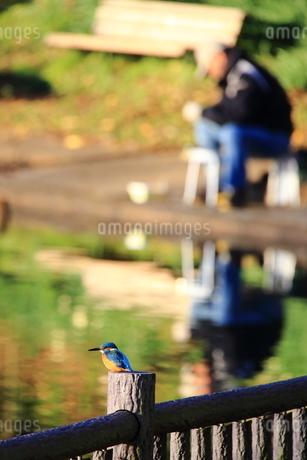 カワセミと釣り人の写真素材 [FYI03147926]