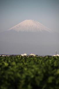 富士山の写真素材 [FYI03147950]