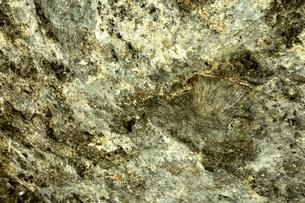 ニューカレドニア・イル・デ・パンのカヌメラ湾の岩場に残された化石の写真素材 [FYI03148249]