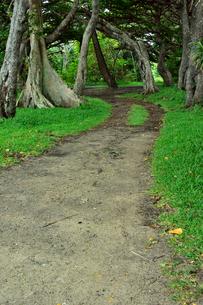 ニューカレドニア・イル・デ・パンのクトビーチ付近の蔓などが絡んだ木々がある林の中の道の写真素材 [FYI03148264]