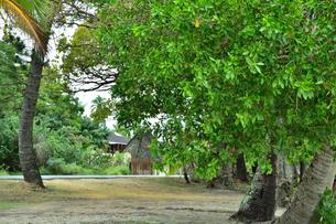 ニューカレドニア・イル・デ・パンのクトビーチ付近のホテルクブニーの道路前の木々の写真素材 [FYI03148288]
