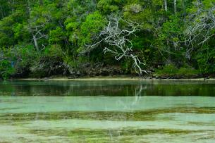 ニューカレドニア・イル・デ・パンのピッシンヌ・ナチュレル(隆起サンゴで外海と隔てられた天然のプールと言われる入江)の写真素材 [FYI03148314]