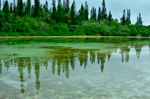 ニューカレドニア・イル・デ・パンのピッシンヌ・ナチュレル(隆起サンゴで外海と隔てられた天然のプールと言われる入江)の通り道にあるナンヨウスギの映り込みがある海の写真素材 [FYI03148361]
