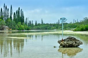 ニューカレドニア・イル・デ・パンのピッシンヌ・ナチュレル(隆起サンゴで外海と隔てられた天然のプールと言われる入江)の通り道にあるナンヨウスギの映り込みがある海にある案内板の写真素材 [FYI03148364]