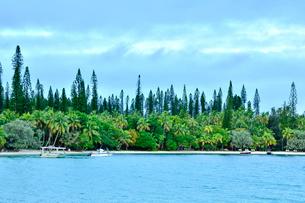 ニューカレドニア・イル・デ・パンのカヌメラ・ビーチから見た沢山のナンヨウスギとヤシと船の写真素材 [FYI03148386]