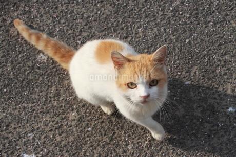 見つめるネコの写真素材 [FYI03148436]