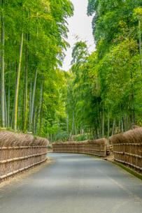 新緑の竹の径 京都の写真素材 [FYI03148463]