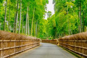 新緑の竹の径 京都の写真素材 [FYI03148471]
