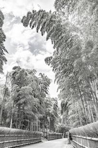 (セピア)新緑の竹の径 京都の写真素材 [FYI03148478]