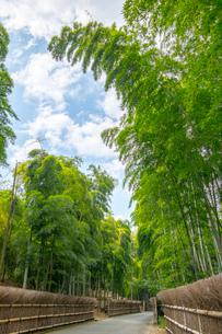 新緑の竹の径 京都の写真素材 [FYI03148479]