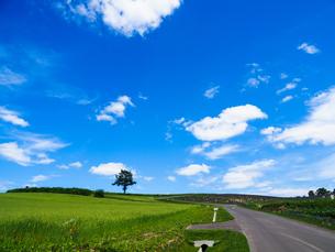 青空と大地の写真素材 [FYI03148701]