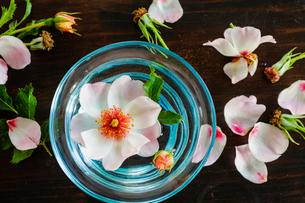 グラスの中の薔薇の花 エリドゥバビロンの写真素材 [FYI03148823]