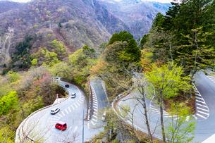 新緑の第一いろは坂 下り専用 日光市 栃木県の写真素材 [FYI03148834]