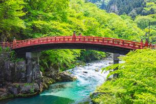 新緑の日光二荒山神社 神橋と大谷川の写真素材 [FYI03148841]