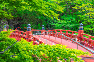新緑の日光二荒山神社 神橋の写真素材 [FYI03148842]