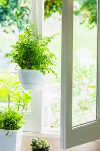 窓辺の植物の写真素材 [FYI03148865]
