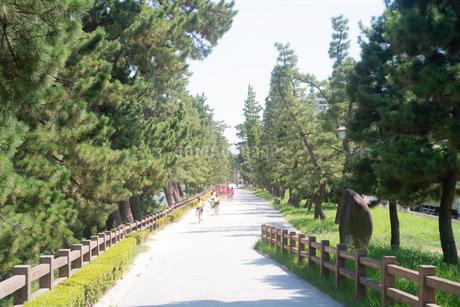 松並木の間を疾走する自転車の群の写真素材 [FYI03149421]