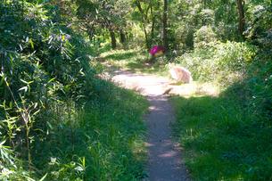 森の中の小道に置かれた傘に強い木漏れ日が降り注いでいますの写真素材 [FYI03149423]