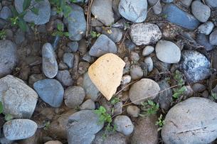 多摩川の土手の小石の写真素材 [FYI03149425]