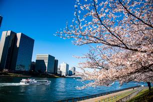 水上バス上る隅田川と満開の桜にオフィスビル群の写真素材 [FYI03149429]