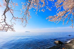 海津大崎の桜と琵琶湖に竹生島の写真素材 [FYI03149692]