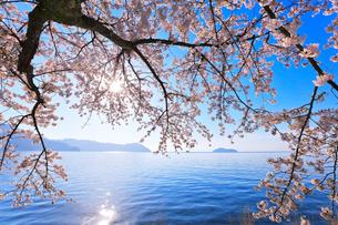 海津大崎の桜と琵琶湖に竹生島と朝日の写真素材 [FYI03149699]