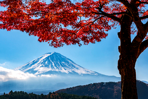 湖北ビューラインから望む富士山  日本 山梨県 南都留郡の写真素材 [FYI03150125]