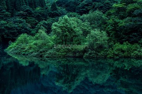 九頭竜川 日本 福井県 大野市の写真素材 [FYI03150136]