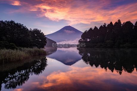 田貫湖から望む富士山   日本 静岡県 富士宮市の写真素材 [FYI03150141]