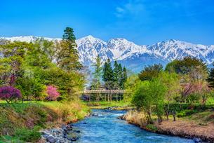 大出公園  日本 長野県 白馬村の写真素材 [FYI03150156]