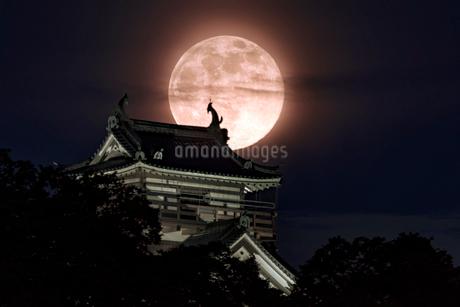 越前大野城 日本 福井県 大野市の写真素材 [FYI03150158]