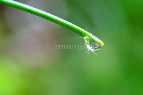 大きな水滴(反射光あり)の写真素材 [FYI03150201]