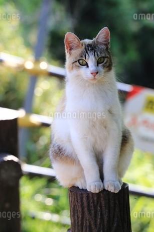 止まり木のネコの写真素材 [FYI03150276]
