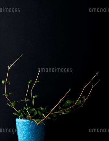 蔦の写真素材 [FYI03150305]