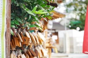 埼玉県川越市の熊野神社の写真素材 [FYI03150396]