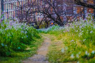 春の小道のイメージの写真素材 [FYI03150653]