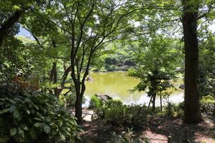 林泉回遊式庭園の写真素材 [FYI03150710]