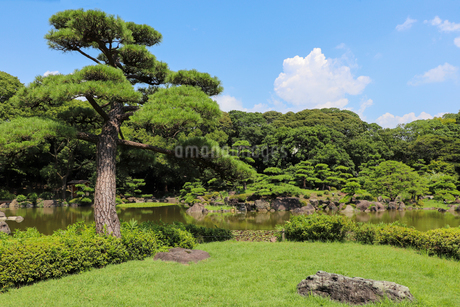 日本庭園の松の木の写真素材 [FYI03150718]