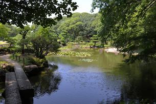 閑静な日本庭園の写真素材 [FYI03150720]