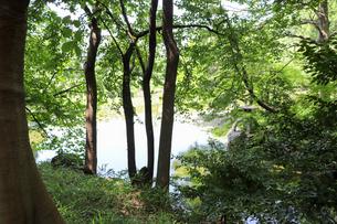 木陰から池を眺めるの写真素材 [FYI03150722]