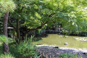 夏の庭園の水辺の写真素材 [FYI03150723]