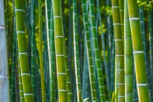 京都・嵐山の竹林の写真素材 [FYI03150739]