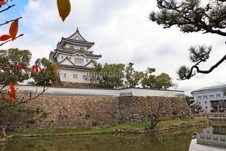 秋の岸和田城の写真素材 [FYI03150834]