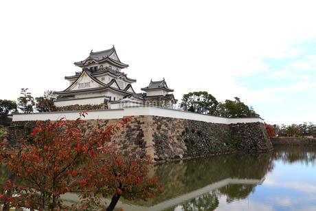 秋の岸和田城の写真素材 [FYI03150837]